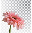 gerbera isolated on a transparent background vector image