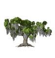 Oak tree isolated vector | Price: 1 Credit (USD $1)