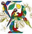 beautiful tropical pattern with colorful parrots vector image