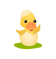 cute little yellow duckling character hatching vector image vector image