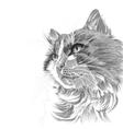Head of a grey cat vector image