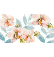 orchid bouquet background watercolor spring vector image vector image