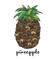 Pineapple fruit isolated on white vector image