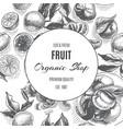 sketch background fruit citrus - bergamot vector image vector image