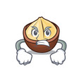 angry macadamia mascot cartoon style vector image vector image