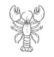 crayfish lobster hand drawn contour vector image vector image
