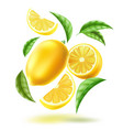 realistic lemon slice fruit leaves motion vector image vector image