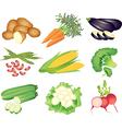 vegetables popular set vector image vector image