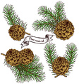 Pine cone set with robbon vector image