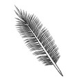 leaf eco symbol vector image vector image