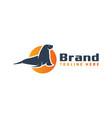 seal animal logo design vector image