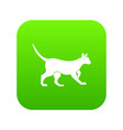 cat icon digital green vector image vector image
