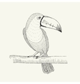 hand drawn toucan bird on the vector image
