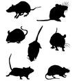 mouses vector image vector image
