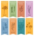 Set of 8 herbal labels on hand drawn sketch vector image
