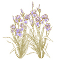 iris bush on white backgrond vector image