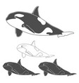 set of black and white killer whale images vector image vector image