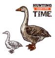 goose wild bird sketch for hunting sport design vector image