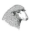 head of sheep drawn in etching style farmed vector image vector image