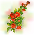 Pomegranate blossoms vector image vector image