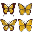 Set of yellow butterflies vector image