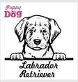 puppy labrador retriever - peeking dogs - breed vector image vector image
