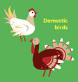 domestic birds rooster and turkey vector image vector image