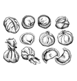 set of dumplings Vintage sketch vector image vector image