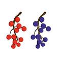 currant berries vector image