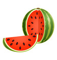 sliced watermelon isolated on white vector image