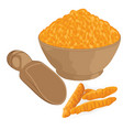 turmeric powder in a bowl and roots vector image