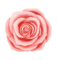 beautiful pink rose floral decorative vector image vector image