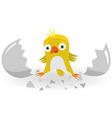 birth of chicken vector image vector image