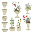 Flower pots with vegetables - herbspepper vector image