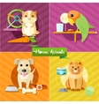 Hamster parrot cat and dog vector image