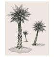 palm trees background vector image vector image