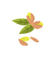 pistachio nuts cartoon vector image vector image