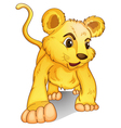cub on white vector image vector image