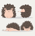 cute hedgehog animal set vector image