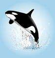a leaping orcas vector image