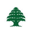 abstract cedar tree vector image vector image