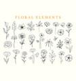 floral elements set botanical drawings vector image vector image