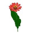zinnia flower vector image