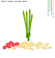 Asparagus with Vitamin K A and B9 vector image vector image