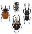 Beetles vector image vector image