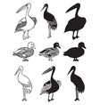 birds stork duck and pelican vector image vector image