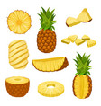 flat set of whole halves and chopped vector image vector image