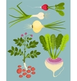 Growing Root Vegetables with Greens Collection vector image vector image