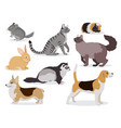 pets icon set cute gray chinchilla fluffy ferret vector image