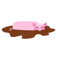 pig in mud piggy dirty puddle farm animal piglet vector image